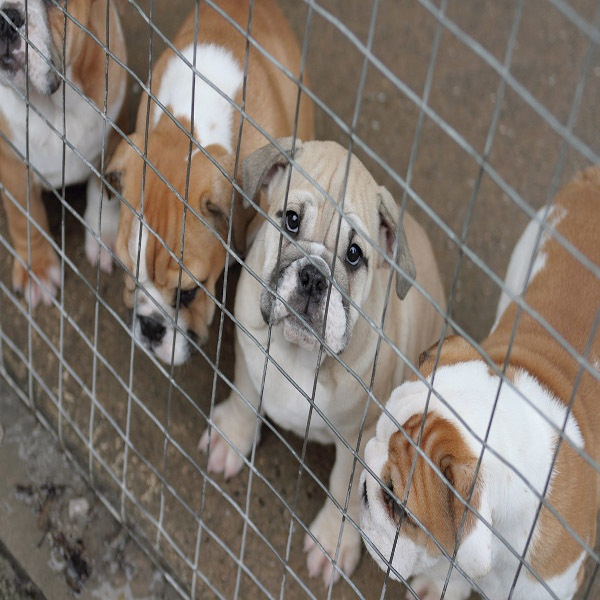 Lawsuit Filed Against Fraudulent Puppy Traffickers Stayed As To Three Of The Four Defendants